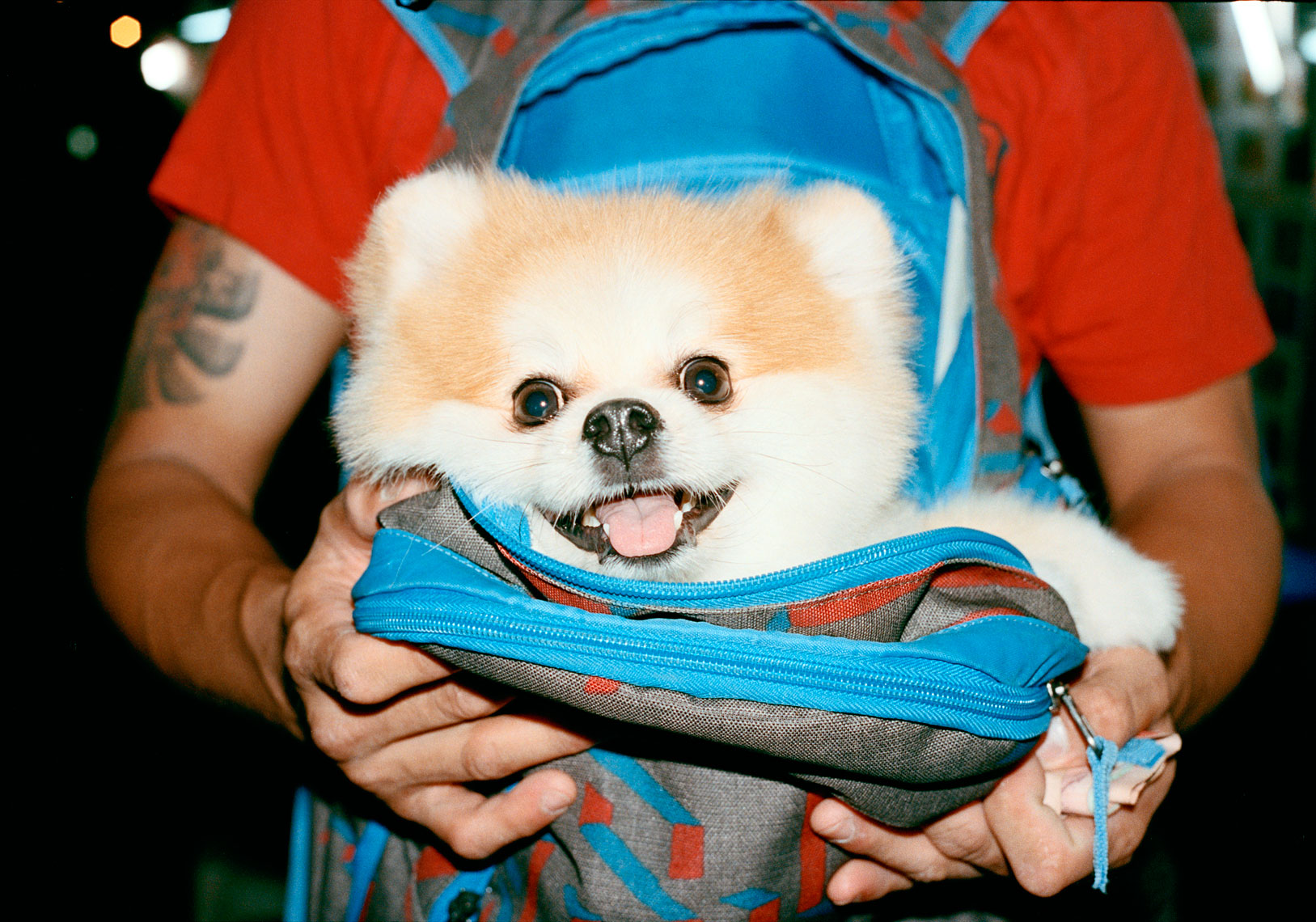 Backpack Pooch