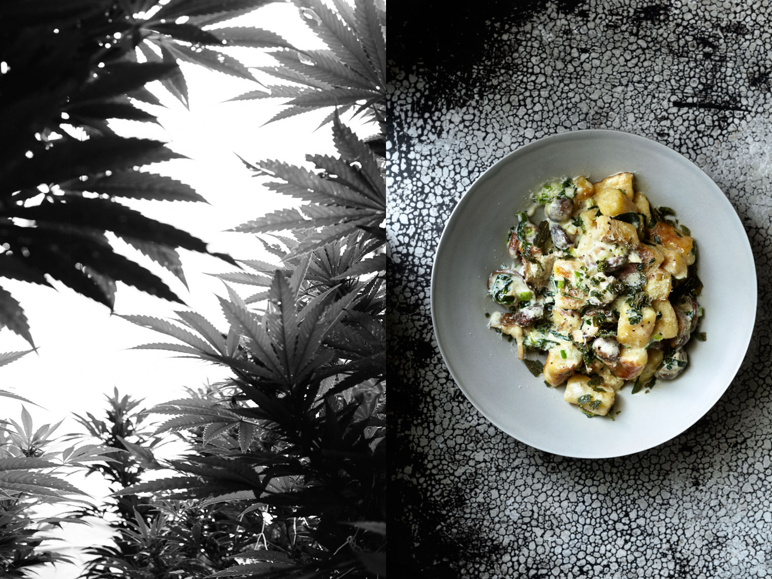 Sinsemilla | Gnocchi White Widow Buttered